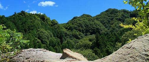 三島の大杉と清和県民の森里山体験ツアー ~終了しました~