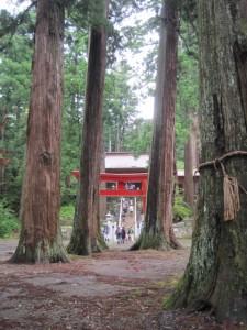 三島の大杉1